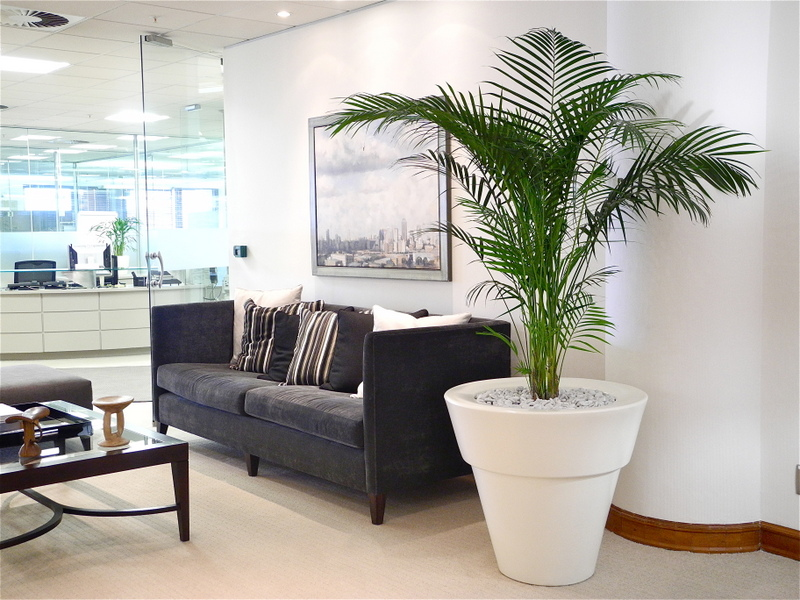 Highmoon office plants for Interior designs with plants