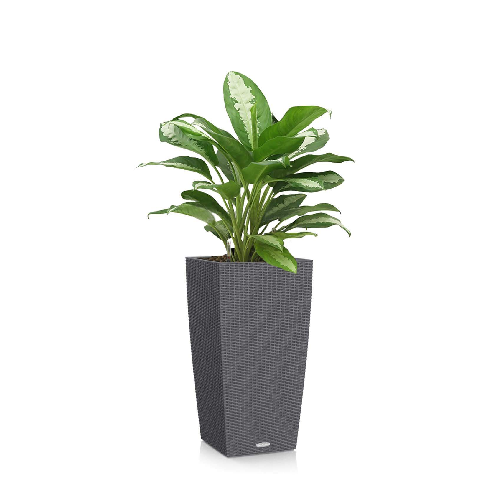 Buy Best Office Plants
